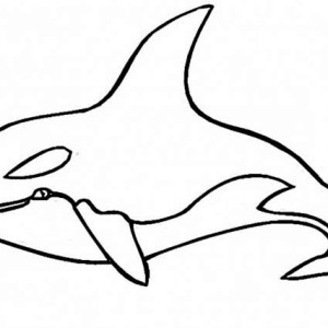 killer whale coloring page killer whale coloring page kids play - Coloring Picture Of A Whale