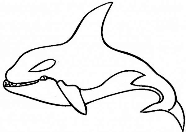 Whale, : Hideous Killer Whale Coloring Page