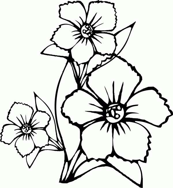 Flowers, : How to Draw Flower Coloring Page