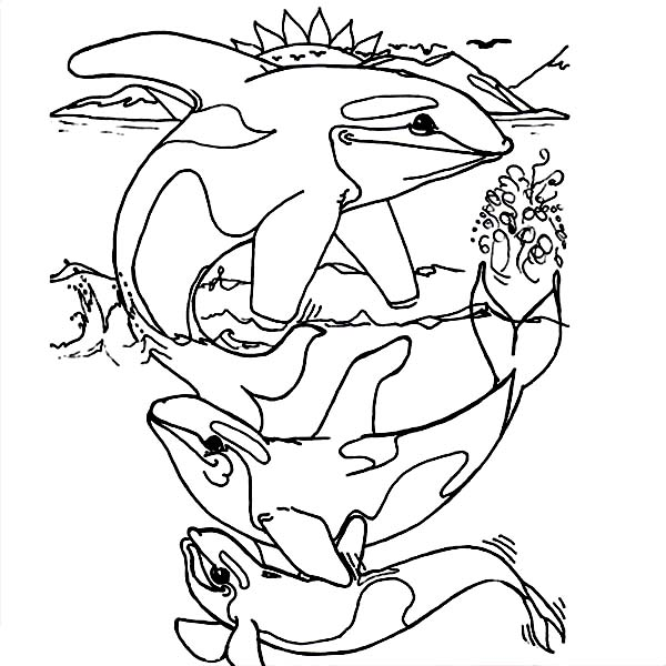 Whale, : Killer Whale Coloring Page