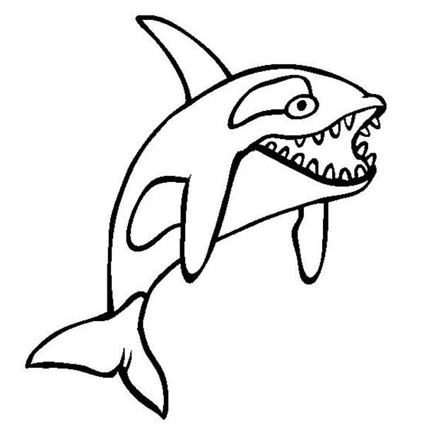 Whale, : Killer Whale Sharp Teeth Coloring Page