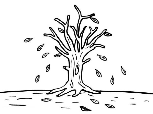 Fall Leaf, : Leafless Tree in Fall Leaf Coloring Page