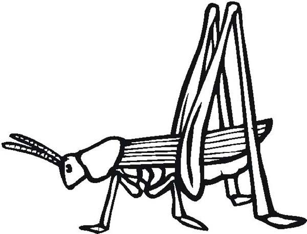 Grasshopper, : Long Legged Grasshopper Coloring Page