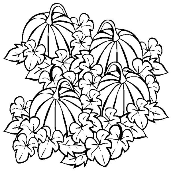 Pumpkins, : Picture of Pumpkins Fruit Coloring Page