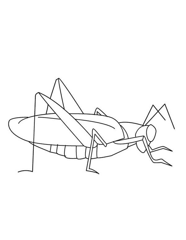 Grasshopper, : Pregnant Grasshopper Coloring Page