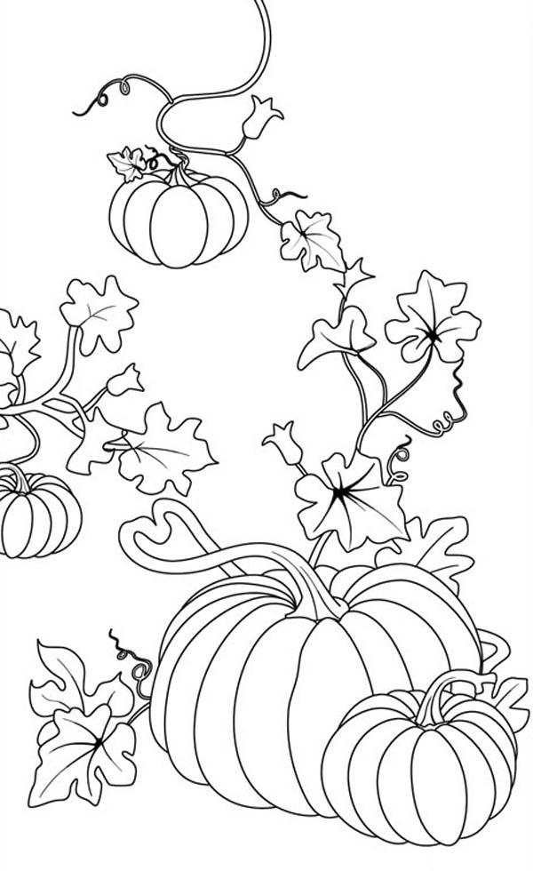 Pumpkins, : Pumpkins Coloring Page