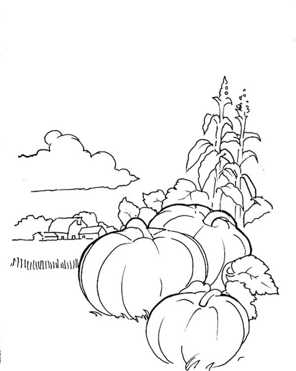 Pumpkins, : Pumpkins Garden Coloring Page