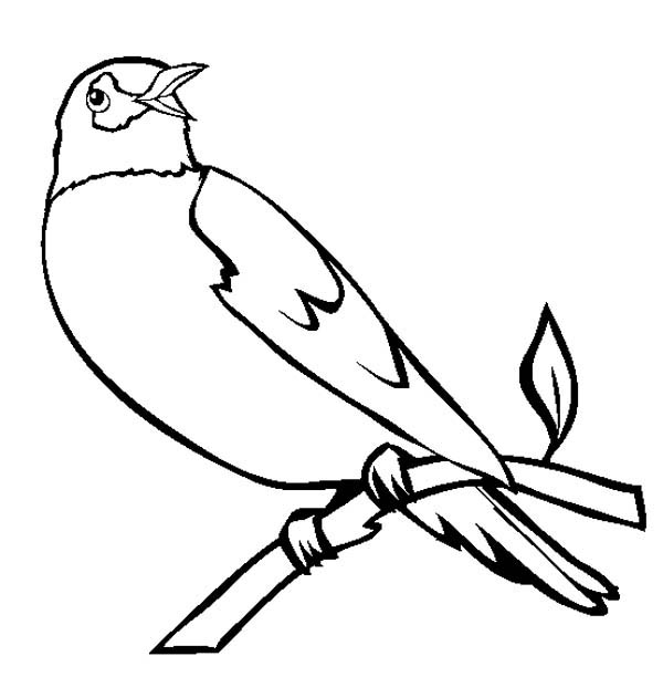 Robin, : Robin Bird Singing Coloring Page