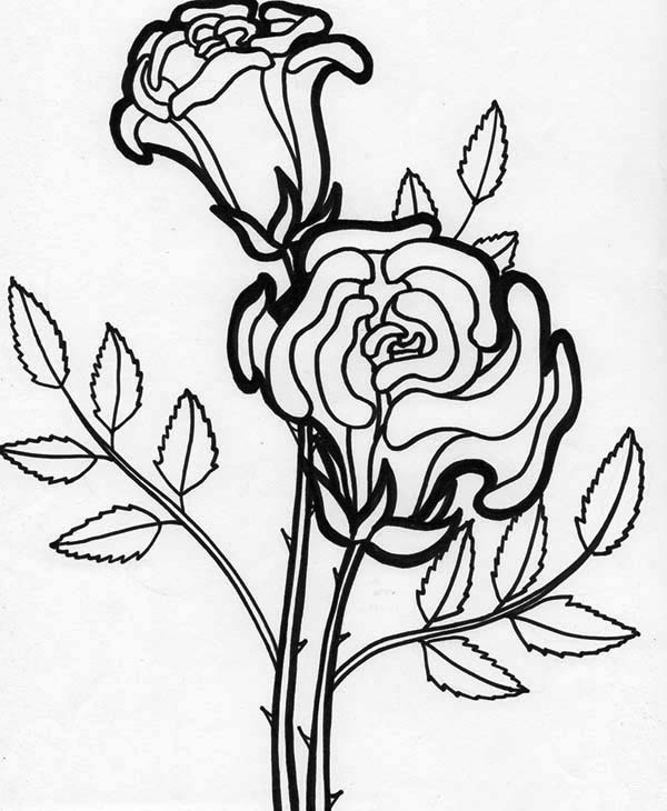 Flowers, : Rose Flower Blooming Coloring Page