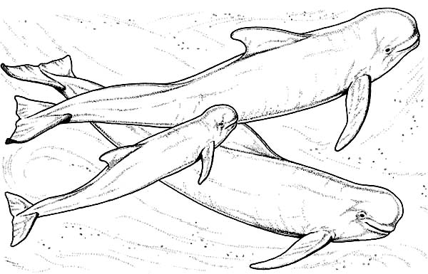 Whale, : Sperm Whale Coloring Page