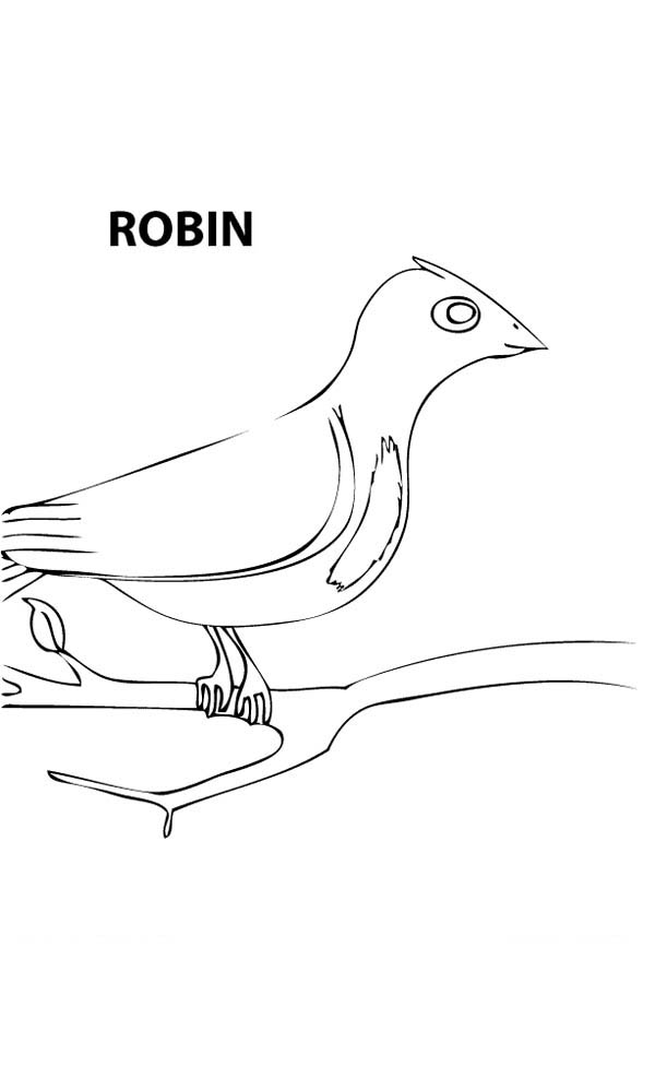 Robin, : Spring Robin Coloring Page