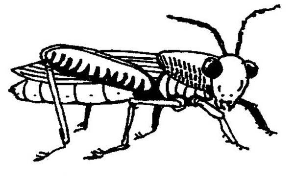 Grasshopper, : Thirsty Grasshopper Coloring Page