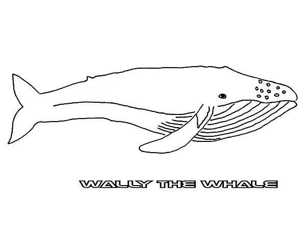 Whale, : Wally the Blue Whale Coloring Page