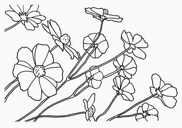 Galerry buttercup flower coloring page