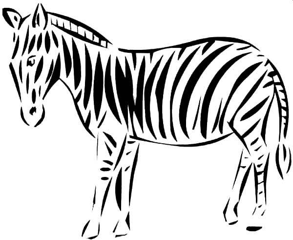 Zebra, : Zebra Black and White Coloring Page