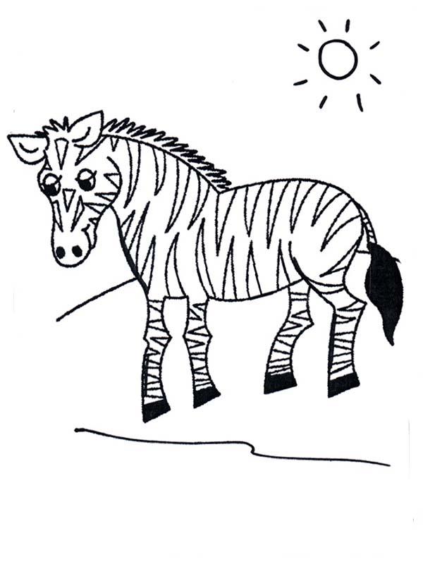 Zebra, : Zebra in Grasslands Coloring Page