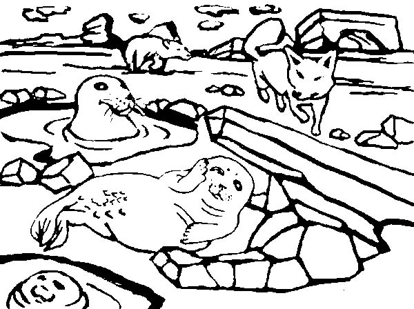 Arctic Animals, : A Group of Arctic Animals Coloring Page