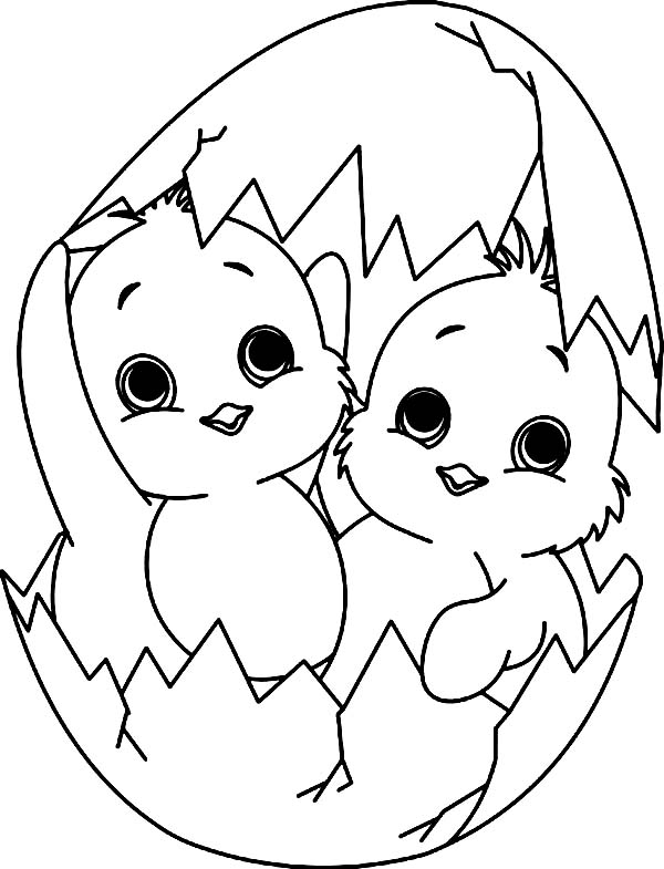 Baby Chick, : A Twin Baby Chick Coloring Page