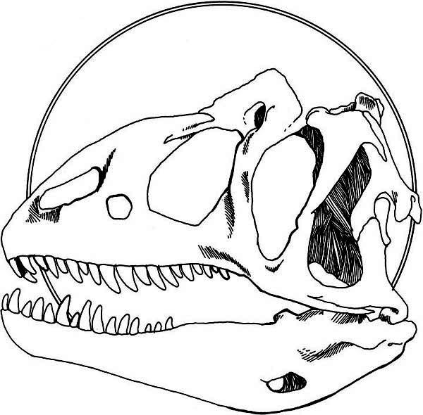 Allosaurus, : Allosaurus Head Fossil Coloring Page