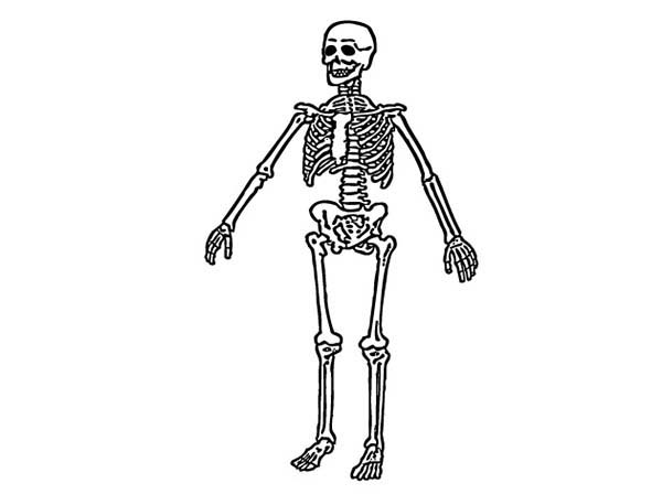 Skeleton, : Amazing Skeleton Coloring Page
