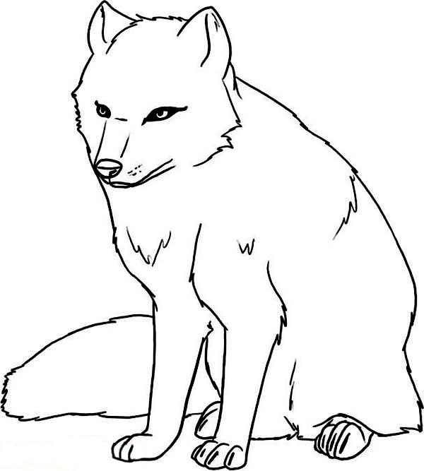 Arctic Animals, : Arctic Animals Cautious Arctic Wolf Coloring Page