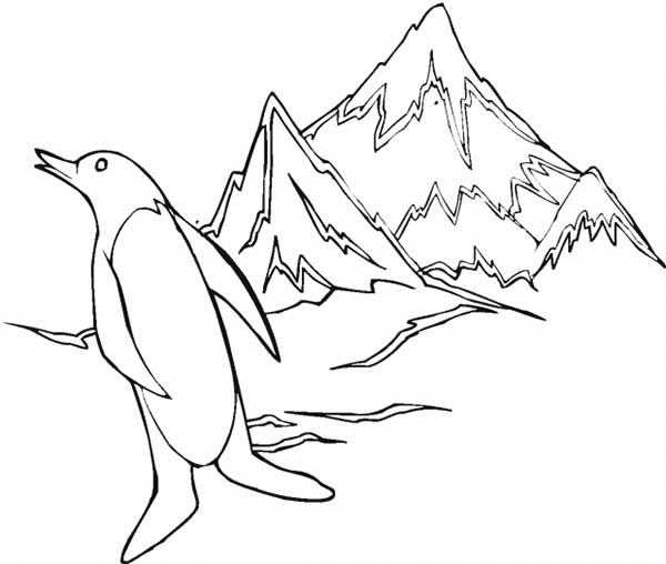 Arctic Animals, : Arctic Animals Penguin at Iceberg Coloring Page
