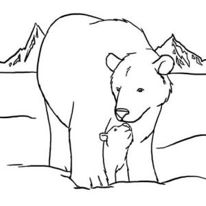 little arctic fox in arctic animals coloring page: little arctic ... - Baby Arctic Animals Coloring Pages