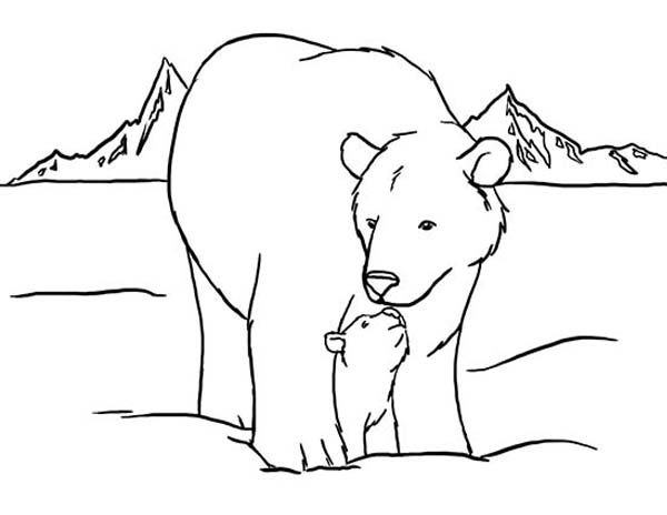 Arctic Animals, : Arctic Animals Polar Bear and His Baby Coloring Page