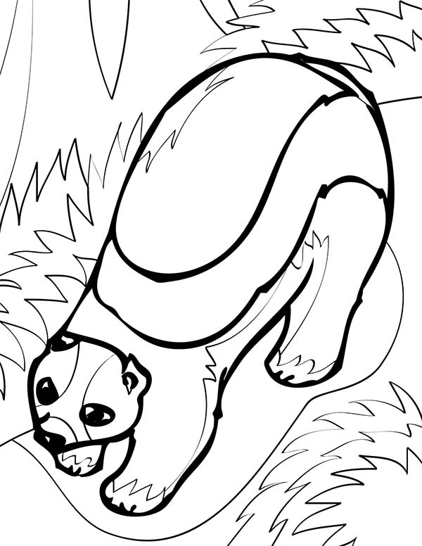 Baby Wolverine Coloring Pages Coloring Coloring Pages