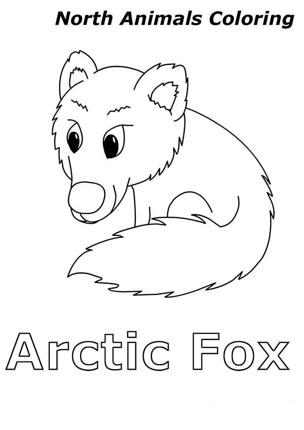 Arctic Animals, : Arctic Fox is Arctic Animals Coloring Page