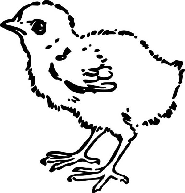 Baby Chick, : Awesome Draawing of Baby Chick Coloring Page