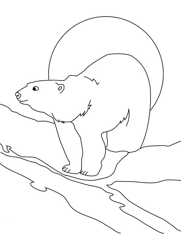 Arctic Animals, : Awesome Drawing of Arctic Animals Polar Bear Coloring Page