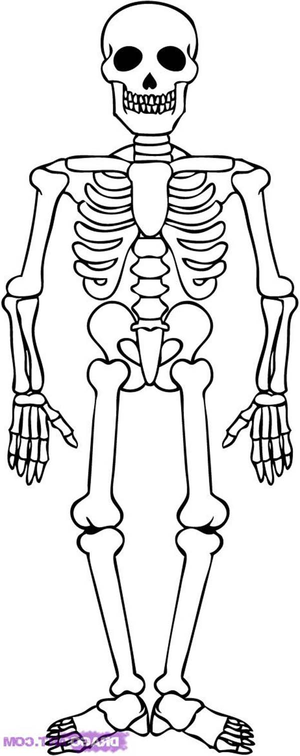 Skeleton, : Awesome Skeleton Drawing Coloring Page