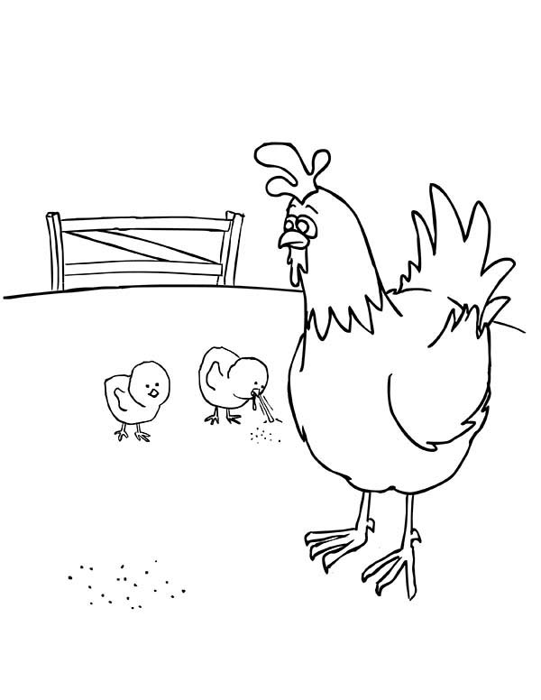 Baby Chick, : Baby Chick Eating with Their Mother Coloring Page