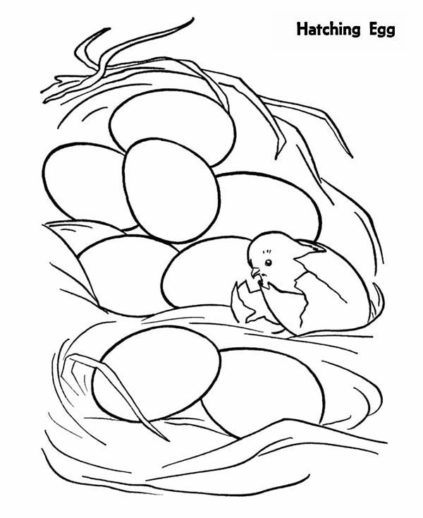 Baby Chick, : Baby Chick Just Hatching from Egg Coloring Page