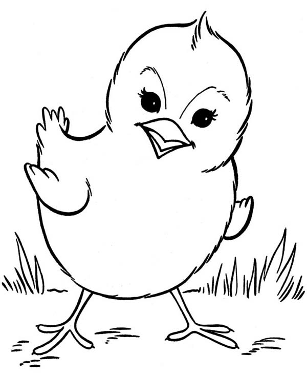 Baby Chick, : Beautiful Baby Chick Posing Coloring Page