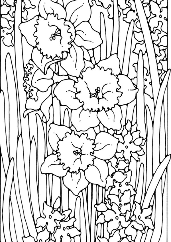 Daffodil, : Beautiful Painting of Daffodil Coloring Page