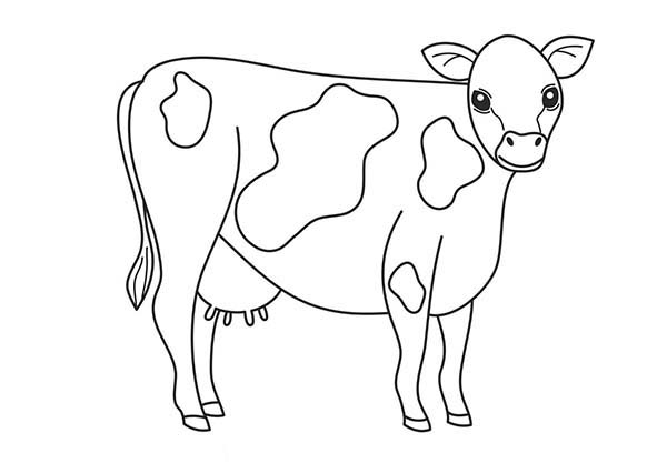 Cow, : Black and White Cow Complexion Coloring Page
