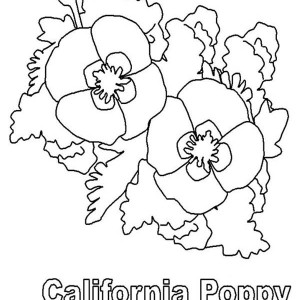 beautiful california poppy coloring page kids play color