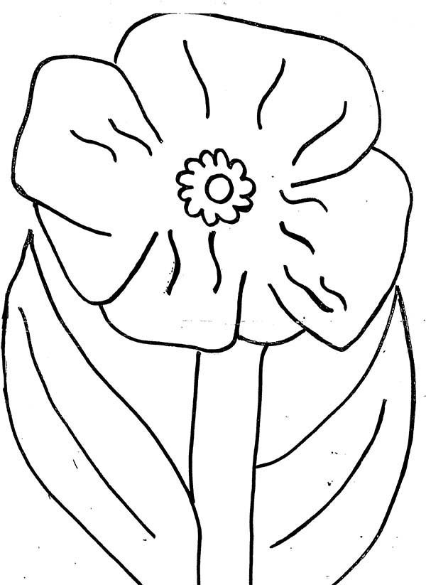 California Poppy, : California Poppy in Blossom Coloring Page