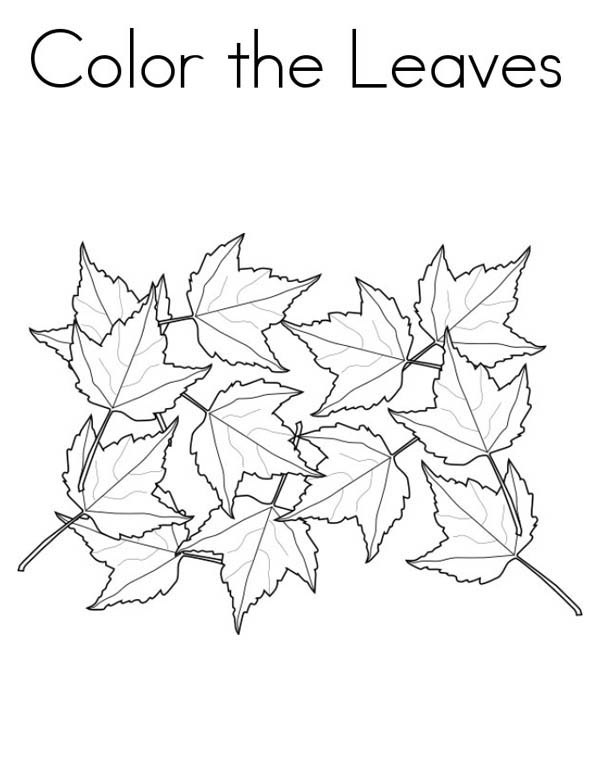 Maple Leaf, : Collecting Maple Leaf Coloring Page