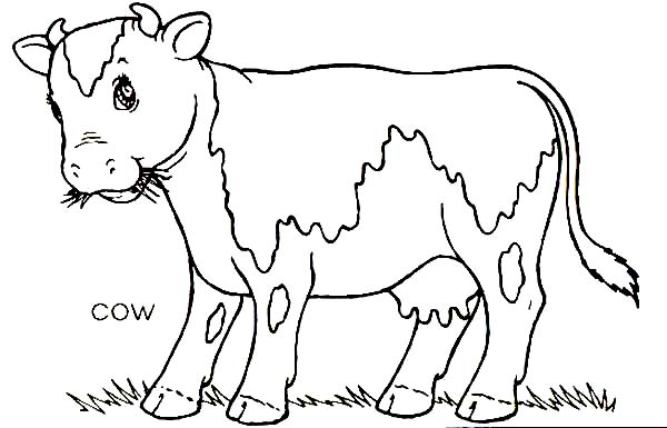 Farm Animal, : Cow Eating Grass on Farm Animal Coloring Page