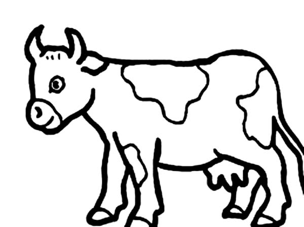 Cow Coloring Sheet. cow coloring pages printable farm dairy milk ...