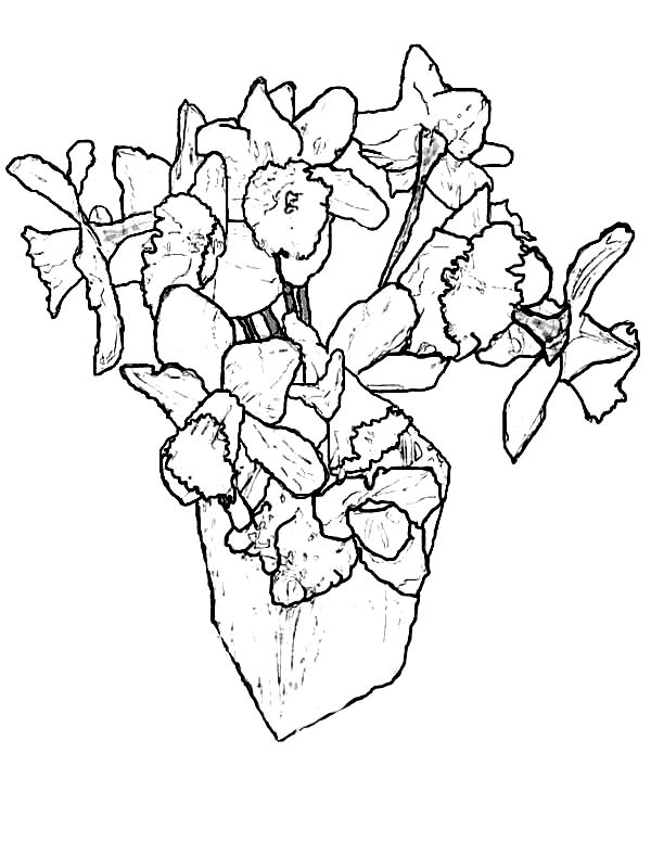 Daffodil, : Daffodil for Living Room Coloring Page