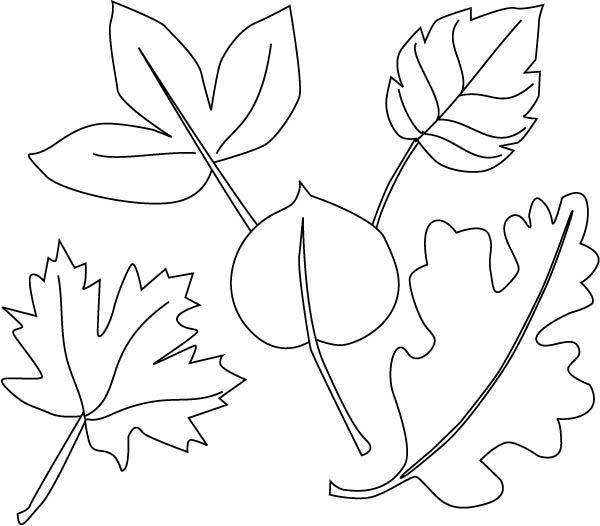Maple Leaf, : Different Leaves and Maple Leaf Coloring Page