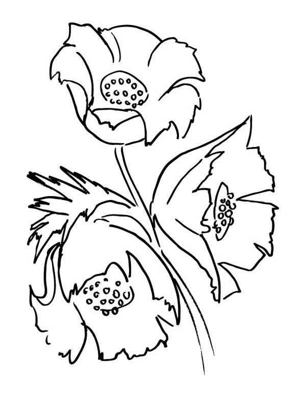 California Poppy, : Drawing of California Poppy Coloring Page