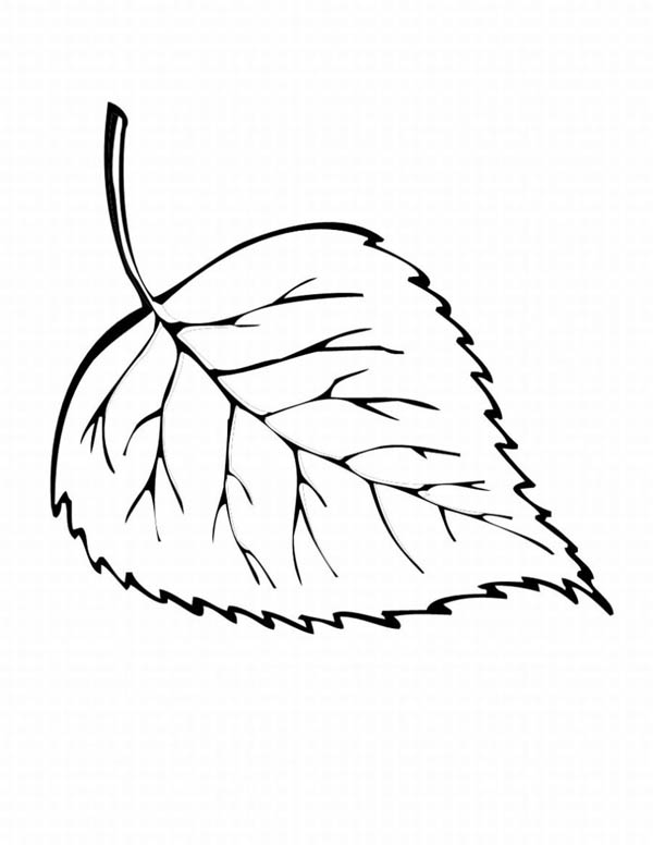 Maple Leaf, : Fall Maple Leaf Coloring Page