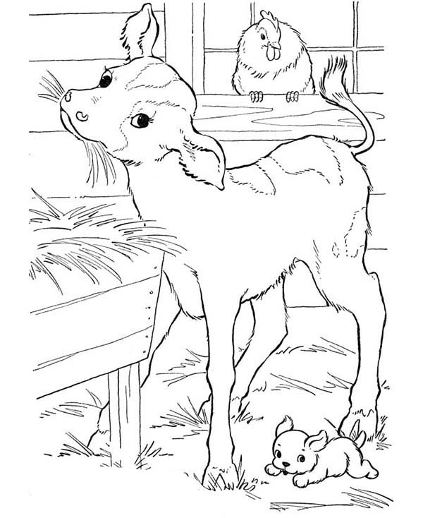 farm animal goat eating straw in the barn in farm animal coloring page