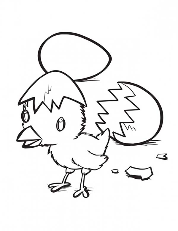 Baby Chick, : Hatching Baby Chick Coloring Page
