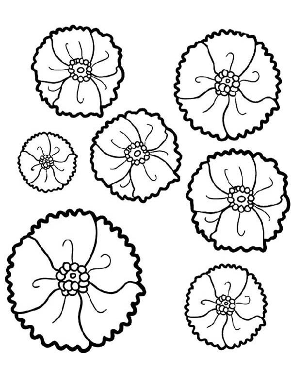 California Poppy, : How to Draw California Poppy Coloring Page